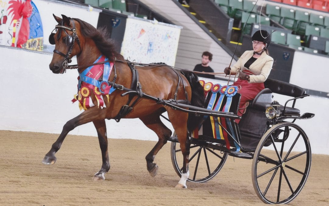 Part 2 – Selling Carriage Horses Online