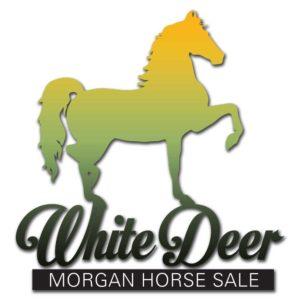 White Deer Morgan Sale